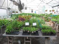 inside_greenhouse_1.jpg